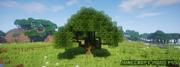 фотография Мод Новые Виды Деревьев