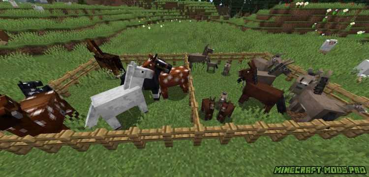 картинка Мод Horse Stats