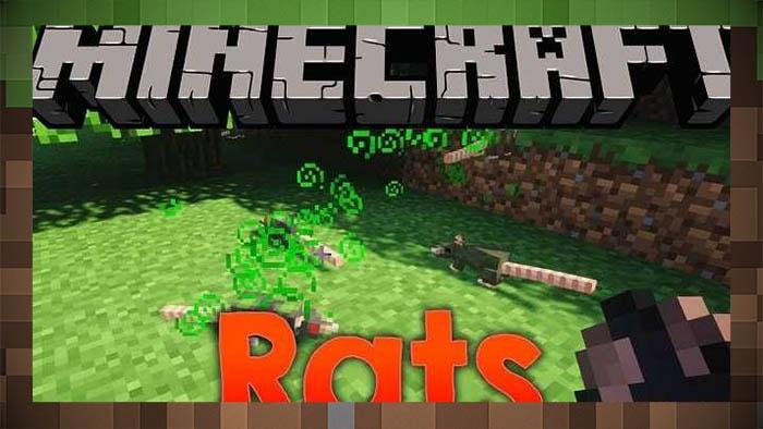 Мод крысы